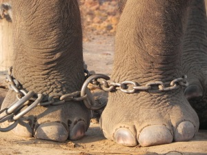 chained-feet