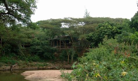 fig_tree16
