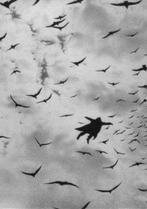 Black wings paint the sky amongst them I fly freely No ground to hold me.