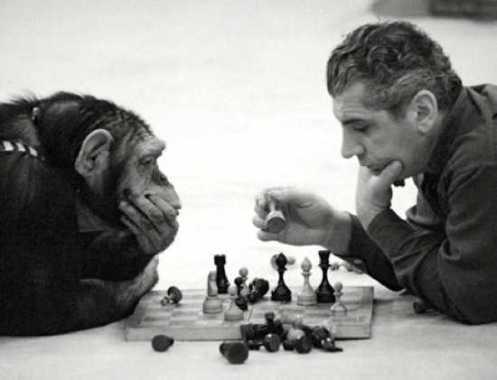 chimp-chess